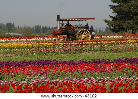 Tulip Steam Power