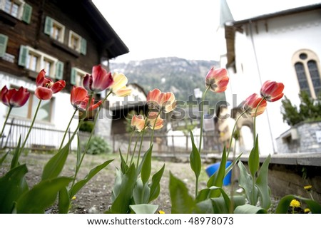 stock-photo-tulip-with-house-background-48978073.jpg