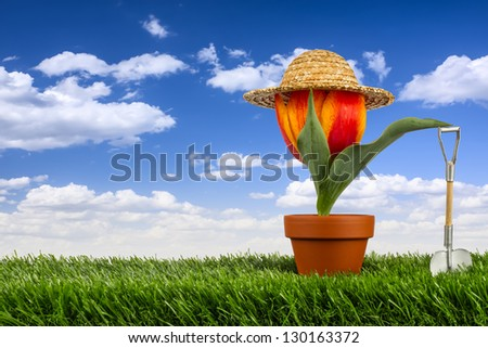 tulip with straw hat and shovel on gras