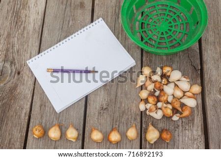 Tulips and a notebook with a blank page for inscription on a wooden background #716892193