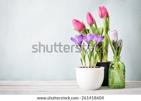 Tulips And Crocus In Vases On Blue Background With Copy Space Ez