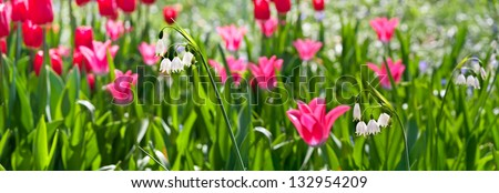 Tulips and lilies of the valley. Floral pattern.  Panorama. Spring landscape.
