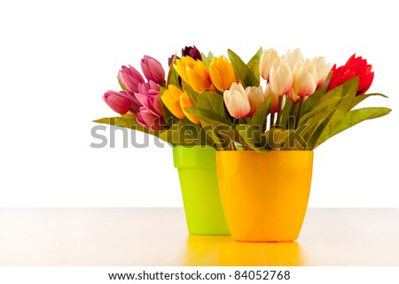Tulips flowers isolated on the white