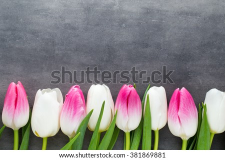 stock photo tulips flowers white and pink on the grey background 381869881 - Каталог — Фотообои «Цветы»