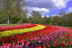 Tulips garden at Chateau de cheverny in spring2019