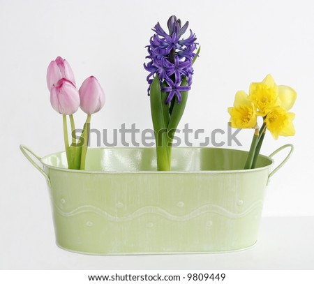 tulips, hyacinths and daffodils in green tin planter