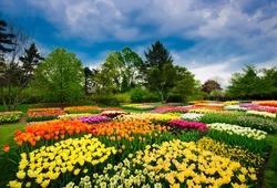 Tulips in Longwood Gardens