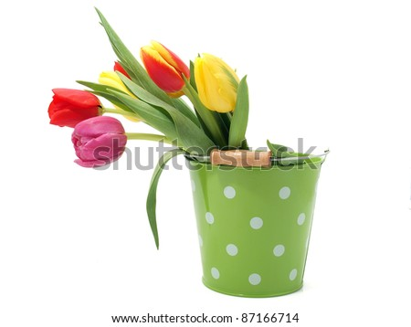 Tulips in the bucket