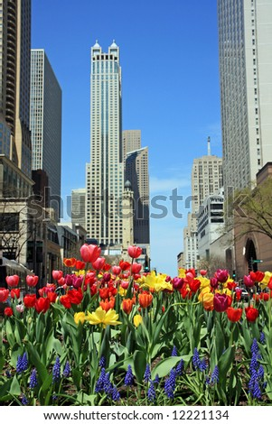 Tulips on Chicago's Michigan Avenue