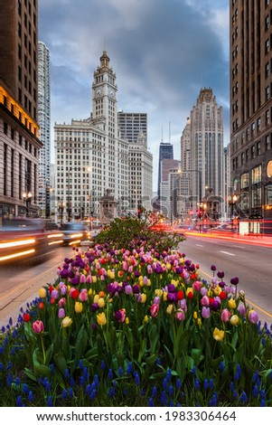 Tulips on Michigan Avenue in downtown Chicago Foto stock ©