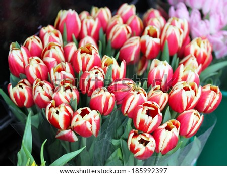 Tulips on sale in flower market