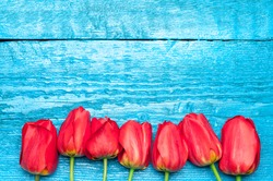 Tulips. Red tulips on a background of blue boards. Spring flowers. Springtime. Valentine Day. Valentines day.