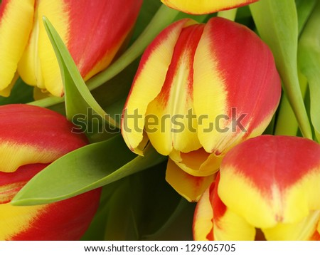 tulips texture