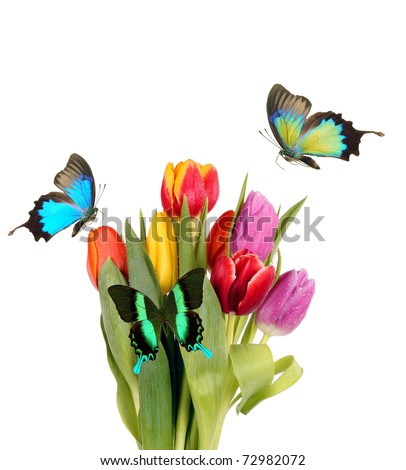 Tulips with exotic butterflies