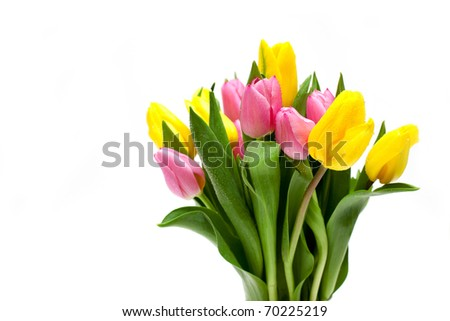 tulips with water-drops and empty space on the left