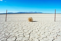Tumbleweed in desert on dry earth