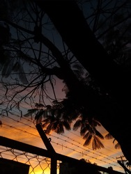 tumblr vibes photo of a  sunset through the branches of a tree
