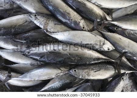 Tuna fish at market in Muscat, Oman