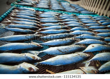 tuna fish in fresh market