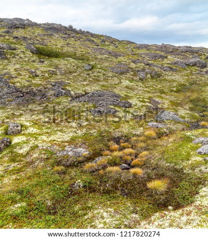 Tundra of the Kola Peninsula beyond the Arctic Circle in inclement weather, green moss and lichens, rocks.Russia