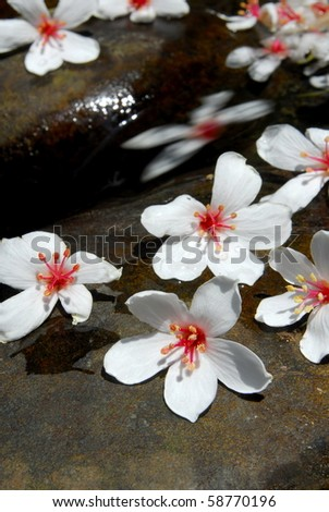 tung blossom / white flowers