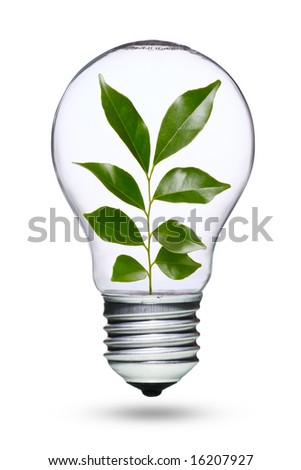 Tungsten light bulb with plant inside