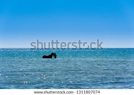 Tunisia. (South Tunisia). Djerba island. Beach of Sidi Mehrez. Horse and rider taking a sea bath #1311807074