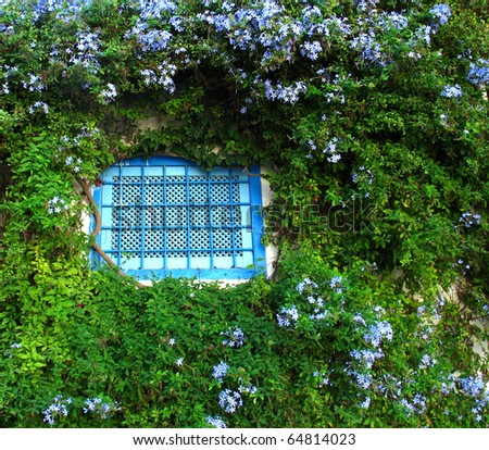 Tunisian blue window with blue flowers