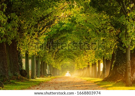 Tunnel-like Avenue of Linden Trees, Tree Lined Footpath through Park at Sunrise Stock photo ©
