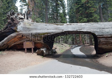 Tunnel log in the Sequoia park, California, USA