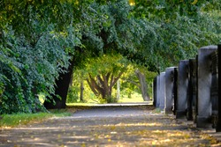 Tunnel made of green trees with yellow autumn leaves