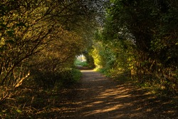 Tunnel of trees at dusk with beautiful autumn shadows