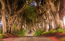 Tunnel of trees road. Road through trees tunnel. Trees tunnel road view. Trees tunnel road