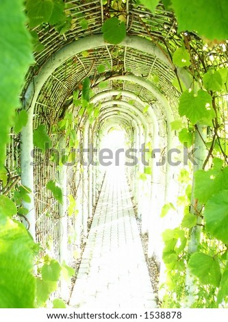 Tunnel. Pathway through Grapevine with light flux at the end of..