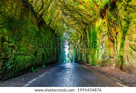 Tunnel road of trees and rocks. Tunnel way road. Tunnel road view ストックフォト ©