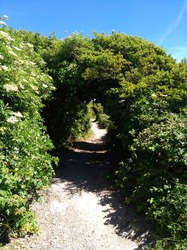 Tunnel (tube) from the trees