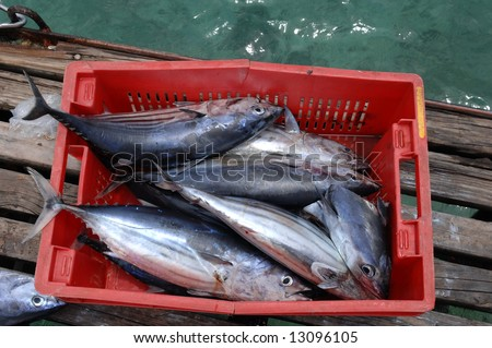 Tunnys are one of the most important seafish