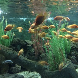 Turkey İstanbul Florya Aqua park . fishes floating in an aquarium. how beautiful a table of water fishes and the wonderful harmony of green