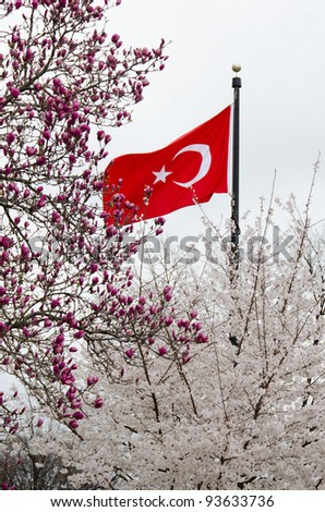 Turkish spring, Turkish flag with spring tree blossoms