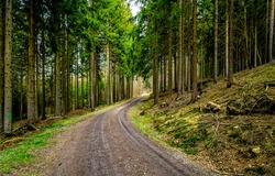 Turn of the road in the forest. Pine forest road. Road in pine forest. Pinewood road landscape