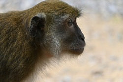Turn side of monkey face can capture face or add caption