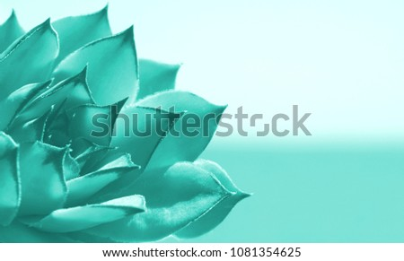 Turquoise abstract nature background with Sempervivum plant in the corner and space for text Stock photo ©