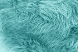 Turquoise blue sheepskin rug background. Wool texture. Close up sheep fur