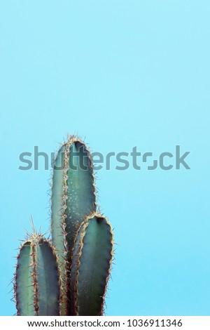 Turquoise cactus on blue background #1036911346