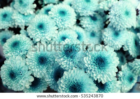 Turquoise Flower Background. #535243870