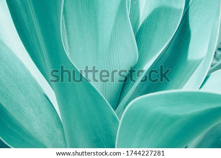 Turquoise pastel tropical plant close-up. Abstract natural Vegetable delicate background. Selective focus, macro. Flowing lines of leaves Stockfoto ©