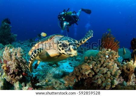 Turtle and diver Foto d'archivio ©