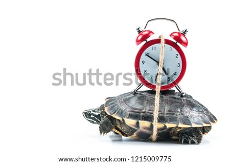 Photo of  Turtle and red clock on white background in concept slowly time