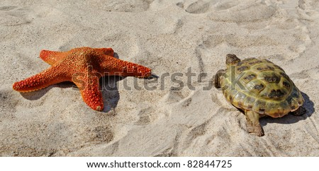 Turtle and red starfish on a sand.