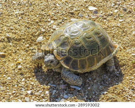 Turtle, animal, reptile